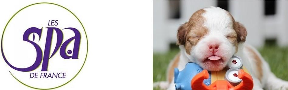 adoption ou achat d'un chiot ou d'un chien adulte