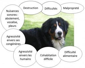 trouble comportement, difficulté comportement, canin, chien