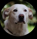 comportementaliste_chien