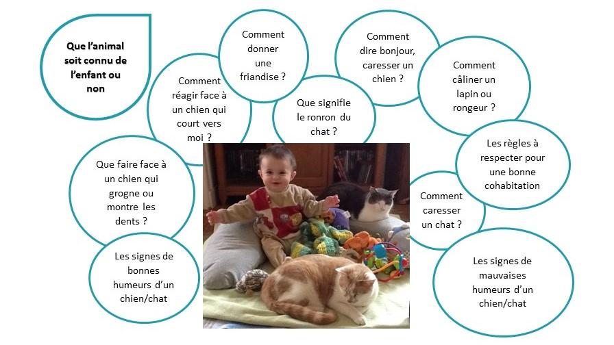 éducation des enfants aux interactions avec les animaux, bébé, crèches, écoles, RAM, périscolaire, prévention morsure, savy en équilibre