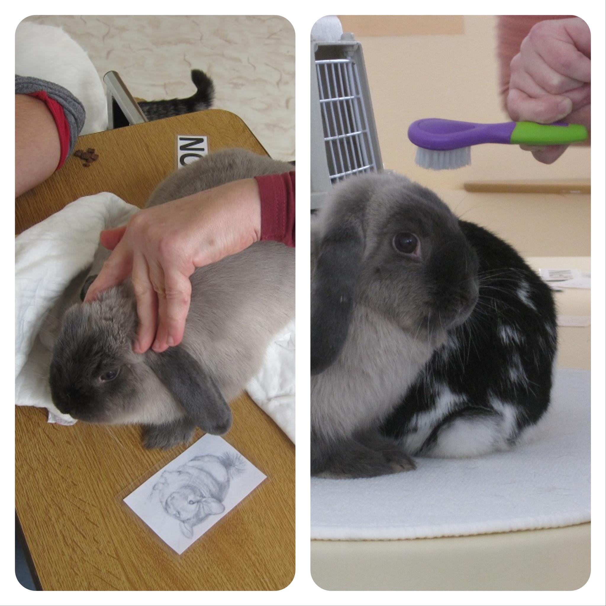 animaux séance médiation animale savy en équilibre stimulation praxique